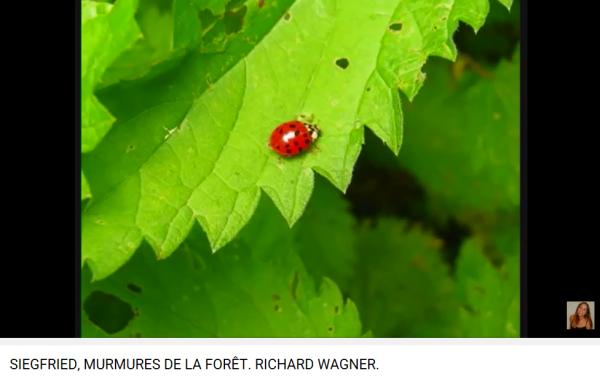 Wagner Siegfried murmures de la forêt 2