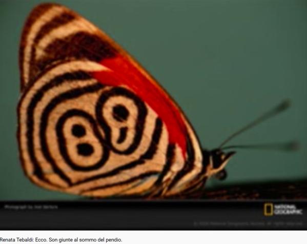 Puccini Butterfly Ecco. Son giunte al sommo del pendio
